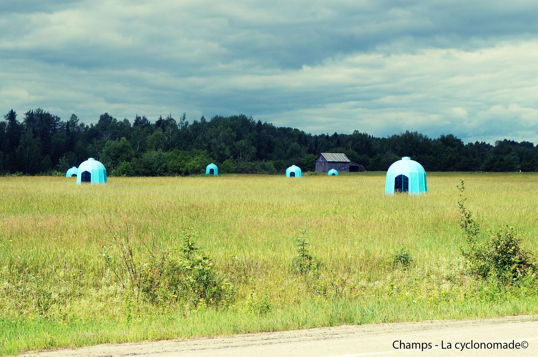 Les champs de bleuets