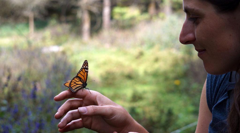 sanctuaire monarque - papillon monarque - cyclotourisme - véloroute des monarques