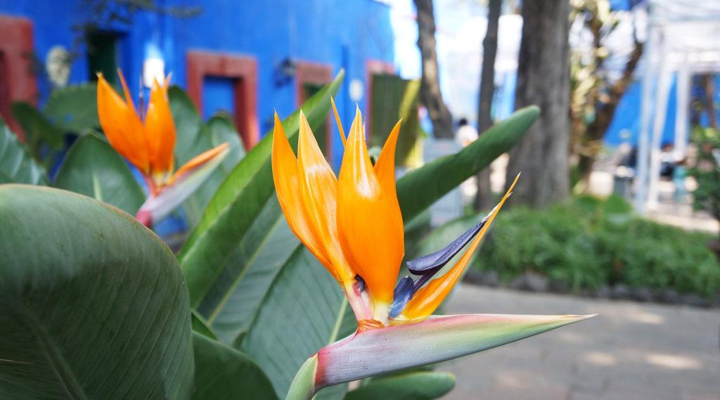 casa azul - mexico à vélo - Frida Kahlo - cyclotourisme - cyclonomade - voyage à vélo