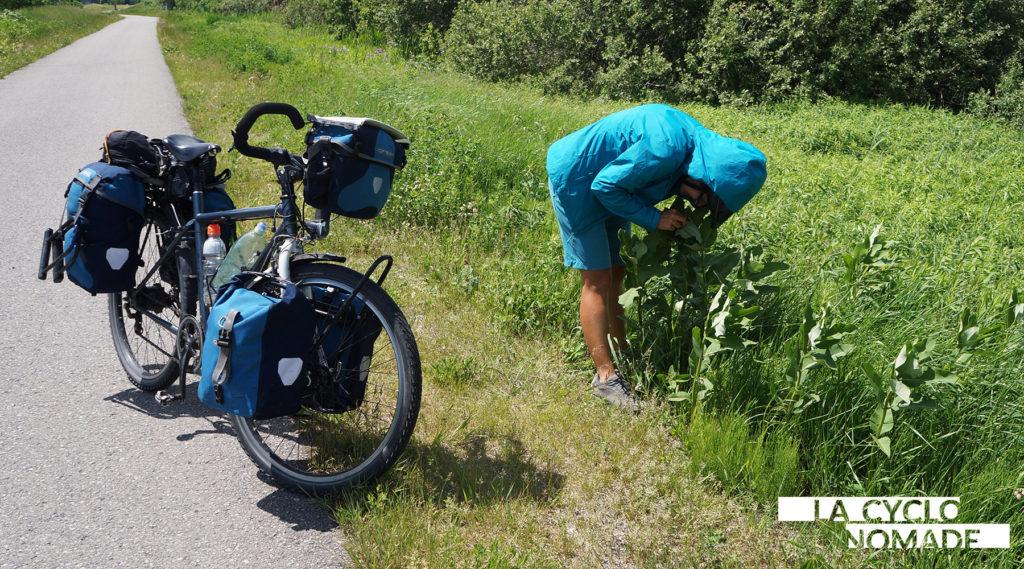 monarque - ontario à vélo - waterfront trail - cyclotourisme ontario - lac érié à vélo - niagara à vélo - chutes du niagara - milles iles - cyclotourisme - la vyvlonomade - voyage à vélo
