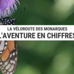véloroute des monarques - chiffres clés - voyage écologique - cyclotourisme - la cclonomade