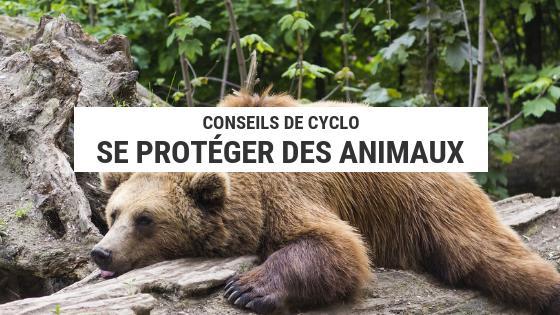 animaux sauvages - camping sauvage - se protéger des animaux - ours - écureuils - ratons laveurs - cyclotourisme - cyclonomade - la cyclonomade - voyage vélo - voyage à vélo